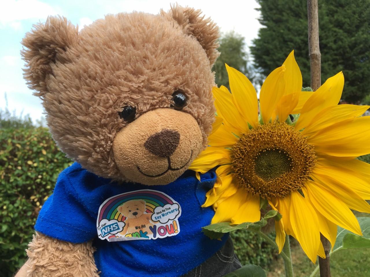Sunflower and teddy bear.